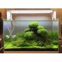 Objet Deco Zen : d coration pour aquarium d 39 eau douce froide ou chaude ~ Teatrodelosmanantiales.com Idées de Décoration