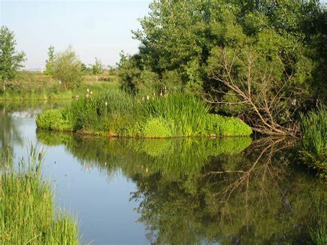 floating islands  pond habitat mississippi state