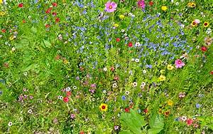 How to create a wildflower meadow in the garden | Lawn ...