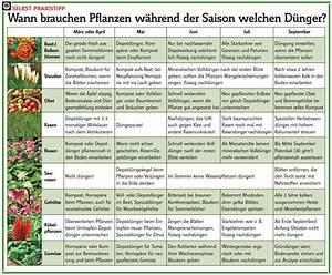 Wann Welches Gemüse Pflanzen Tabelle : wann d ngen garten deko garten pflanzen und garten pflanzen ~ Frokenaadalensverden.com Haus und Dekorationen