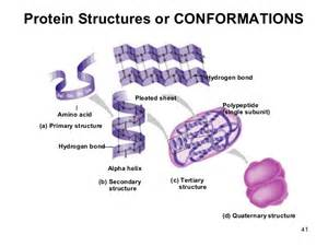 Primary Protein Structure Bonds