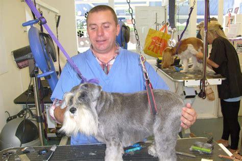 dog grooming top dog grooming studios limerick city