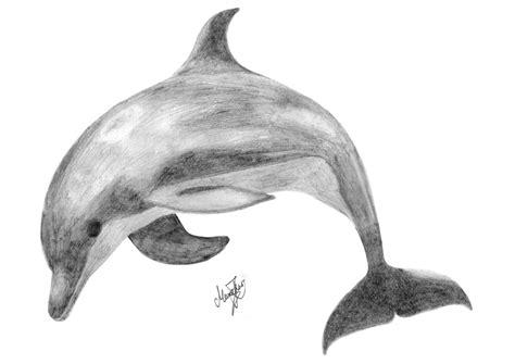 dolphin sketch  themonotm  deviantart