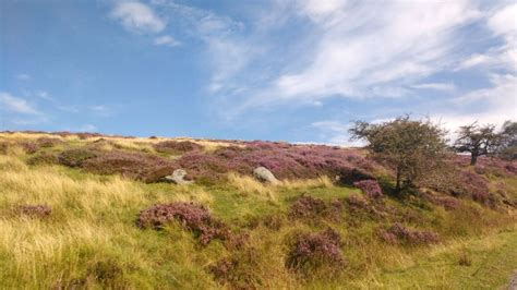 11 Reasons To Take Your Toddler To The North York Moors ...