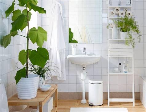 plantes salle de bain 35 id 233 es fra 238 ches pour les plantes dans la salle de bains