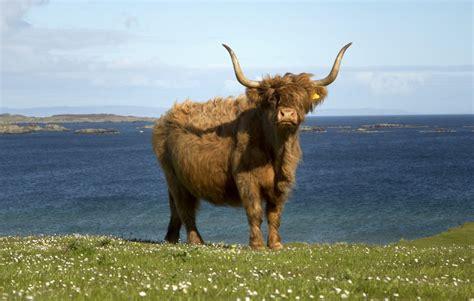 Six Uniquely Scottish Experiences