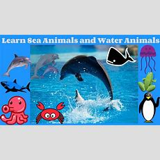 Learn Sea Animals And Water Animals Names And Sounds  Sea Animals Names And Sounds Water