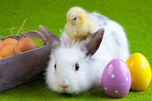 Happy Easter Bunny HD Wallpapers 9To5Animations Com