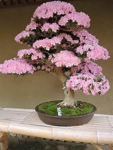 Wunderschone bonsai baum kompositionen archzinenet for Garten planen mit bonsai lebensbaum kaufen