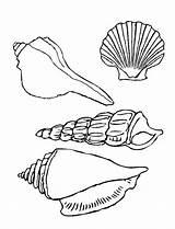 Seashell Coloring Shells Sea Pages Seashells Printable Drawing Types Template Clipart Four Drawings Line Print Under Ocean Colornimbus Sketch Templates sketch template
