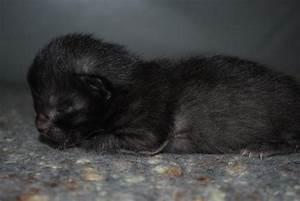 Sweet Baby Black Kitten Photograph by Michelle Cruz