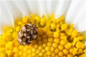 Mücken Im Haus Was Tun : ungeziefer und ungeziefer im haus ~ Markanthonyermac.com Haus und Dekorationen