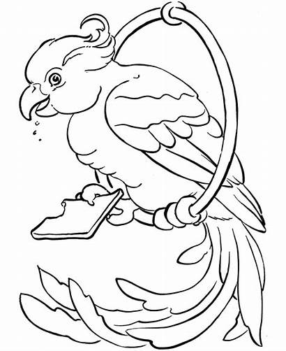 Coloring Pages Birds Exotic Bird Parrot Printable