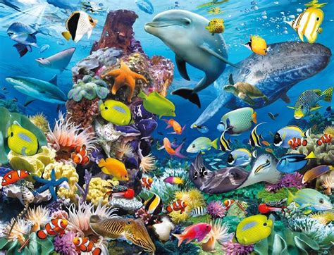 amazing hd sea fish wallpapers collection remix video