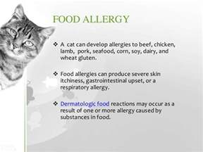 signs of being allergic to cats cat allergies symptoms diagnosis treatment prevention