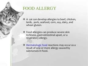 severe cat allergies cat allergies symptoms diagnosis treatment prevention