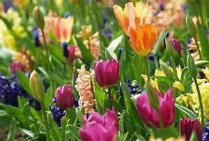 Garten Blumen Bilder : blumen lexikon garten fotos zu blumen und garten ~ Whattoseeinmadrid.com Haus und Dekorationen