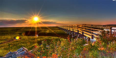 Lato, Drewniany, Most, Kolorowe, Krzewy