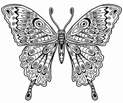 Mandala Animal Animals Cool Butterfly Coloring Maša