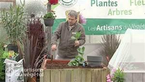 Planter Des Choux Fleurs : comment planter et cultiver les choux fleurs pomm s de bruxelles raves fris s pointus ~ Melissatoandfro.com Idées de Décoration