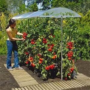Tomatenzelt Selber Bauen : tomatenhaus selber bauen oder kaufen schutzdach f r ihre tomaten ~ Eleganceandgraceweddings.com Haus und Dekorationen