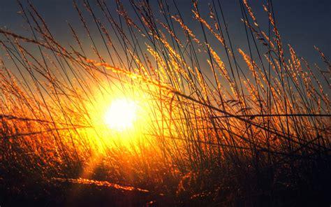 nature sunlight plants golden hour wallpapers hd
