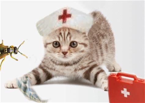 animale vanitoso bisbigli puntura di ape nel gatto pronto soccorso