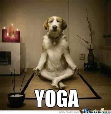 Funny Yoga Meme - 21 best images about yoga on pinterest urban outfitters funny puppy memes and funny cat pictures