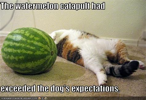 watermelon catapult  exceeded  dogs