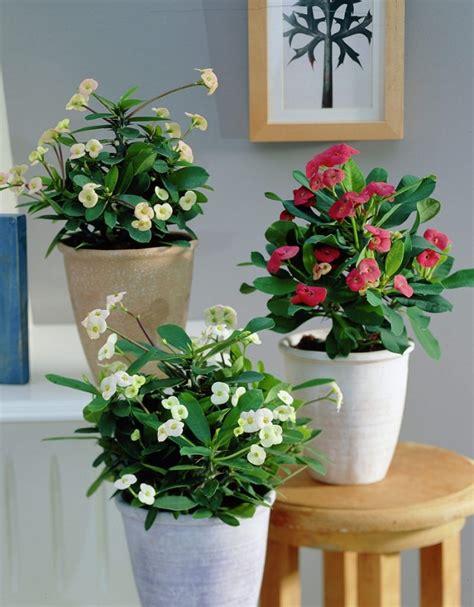 best flowering houseplants balcony garden web