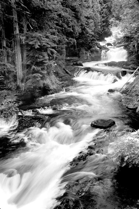 grayscale photography  running river surrounded forest