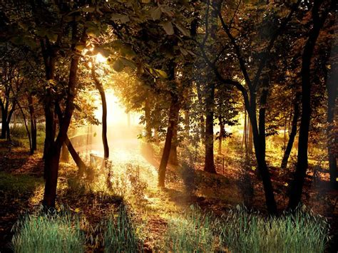 Animated Forest Wallpaper - beautiful forest animated wallpaper http www