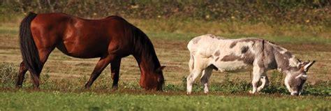 companion animals  horses equestrian barns