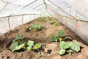 Gurken Pflanzen Gewächshaus : gurken pflanzen im gew chshaus stockfoto veranis 3185355 ~ Pilothousefishingboats.com Haus und Dekorationen