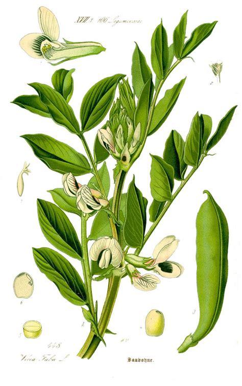 images  botanical study drawings  pinterest