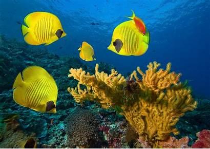 Underwater Fish Ocean Tropical Sea Fishes Reef