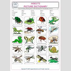 Insects Vocabulary Matching Exercise Esl Worksheets For Kids And New Learners