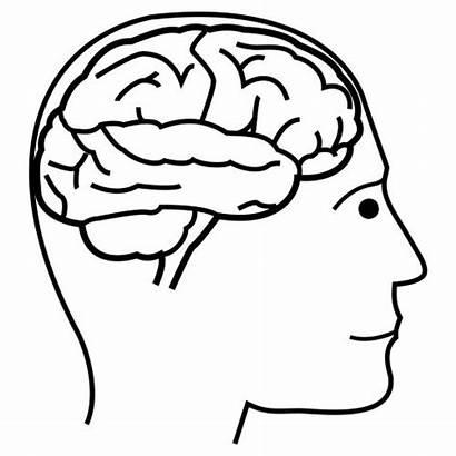 Brain Coloring Cerebro Human Pages Preschool Organs