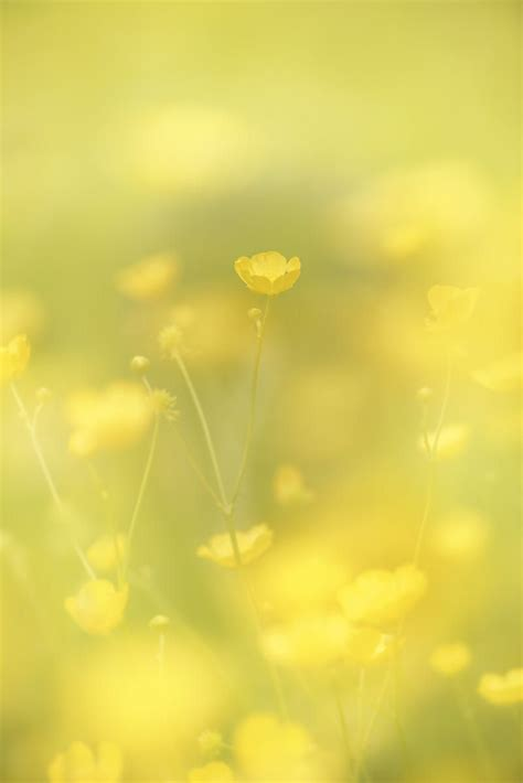 Golden Dreams And Pastel Shades Come To by Olivier Mattelart Summer S Amarillo Fondo