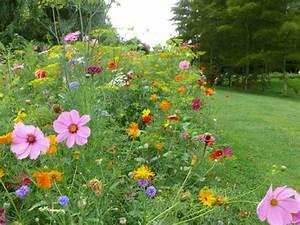 Graines Fleurs Des Champs : prairies fleuries les fleurs de l 39 t sur le mur v g tal ~ Melissatoandfro.com Idées de Décoration