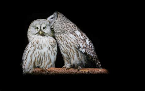 Owl Wallpapers by Beautiful Wallpapers Owl Wallpaper