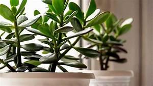 Zimmerpflanzen Für Schlafzimmer : pflanzen im schlafzimmer mythen infos tipps f r einen ~ A.2002-acura-tl-radio.info Haus und Dekorationen