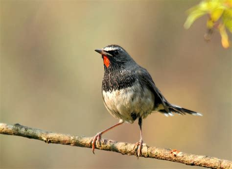 bird spots in southern india bird sanctuaries in india top birding destinations in