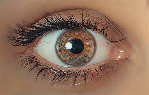 Colore Degli Occhi Diversi - colore degli occhi diversi progetti architettonici