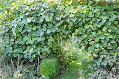 au jardin 187 des kiwis par kilos