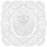 Millie Marotta Tawny Owl Birds Pavilion Pavilionbooks Coloring sketch template