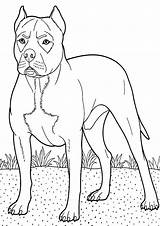 Boxer Coloring Dog Backyard Colouring Guarding Guard Boxers Breed Police Trending Days Tocolor Button Using Sketch Template sketch template