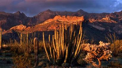 Arizona Cactus Organ Pipe National Wallpapers Park