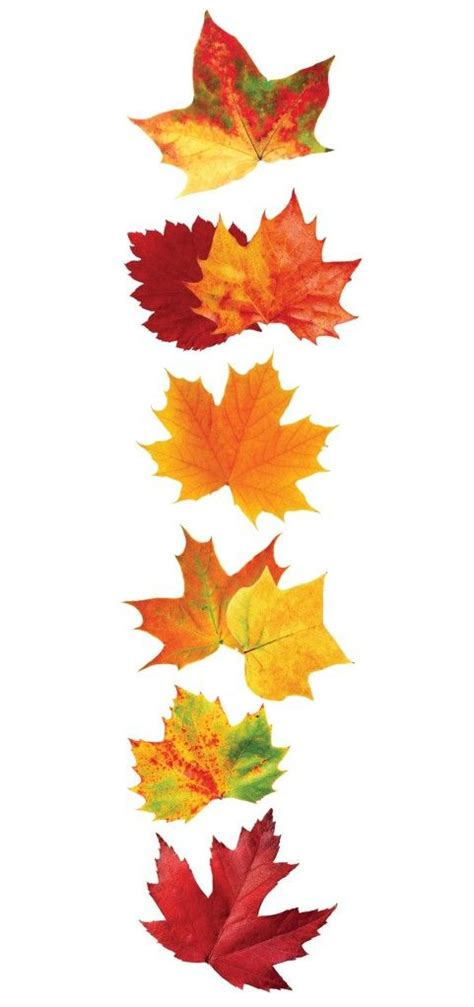 autumn leaves  sticker paper house fall leaves