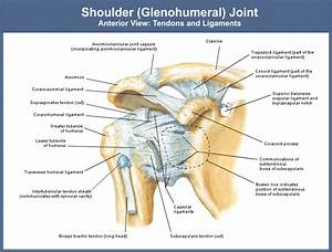 Medical Transcription: Rotator cuff